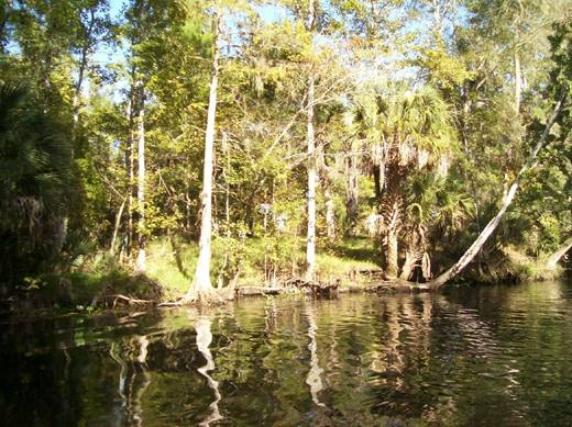 Another recent Ocklawaha River picture